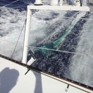 17/11/2012 - A bord